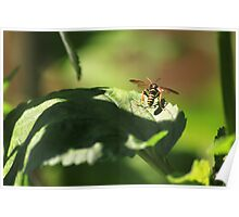 Nomad bee Poster