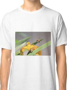 Bumble bee landing on yellow flag iris Classic T-Shirt