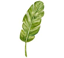 tropical leaf Photographic Print