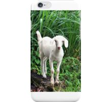 THE BABY GOAT iPhone Case/Skin