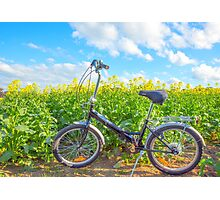 Canola At Youanmite... Photographic Print
