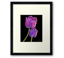 Plum Purple Tulips Framed Print
