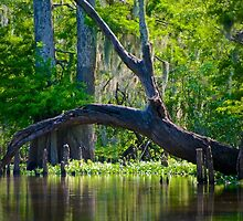 Atchafalaya Basin Scene by Mike Capone