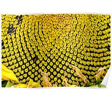 Yello Sunflower macro Poster