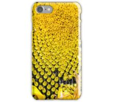 Sunflower picked and ripe iPhone Case/Skin