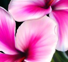 Bright Pink Hibiscus Flowers Sticker