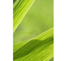 Abstract iris leaf background Photographic Print