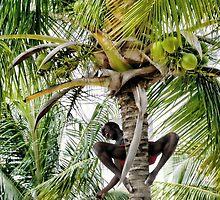 Tree Hugger by lynn carter