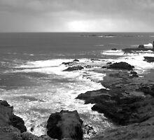 Sea Breeze- Black & White by Lynnrmorris