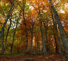 Beautiful autumn colors in the forest by jordanrusev
