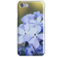 Phlox divaricata flowers iPhone Case/Skin