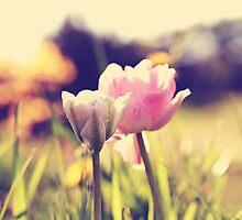 "Tulipa ""Angelique"" by Marta Jonina"