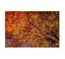 yellow and orange autumn tree Art Print