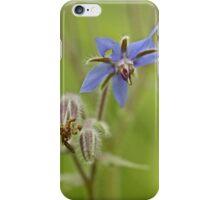 Borage Wildflower - Borage officinalis - Annual Herb iPhone Case/Skin