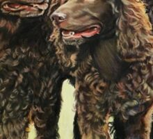 Irish water spaniels Sticker