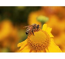 Im a busy bee Photographic Print