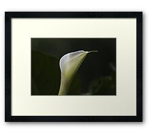 lily blooming in the garden Framed Print