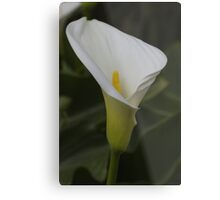 lily blooming in the garden Metal Print