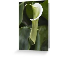 lily blooming in the garden Greeting Card