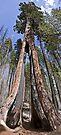 Clothespin Tree 2 by Alex Preiss