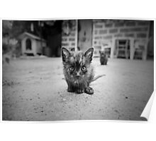 Stray Cat #1 Poster
