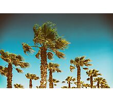 Green Palm Trees On Clear Blue Sky Photographic Print
