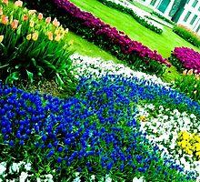 Multicolored tulips. by ALEJANDRA TRIANA MUÑOZ