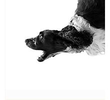 Retriever | Dogs Photographic Print
