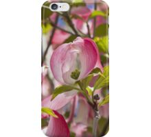 blooming magnolia flowers in spring iPhone Case/Skin