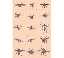 Insect mania Photographic Print