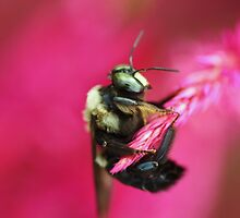 bee here by ANNABEL   S. ALENTON