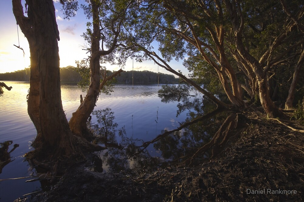 Rope Swing over Lake Ainsworth by Daniel Rankmore