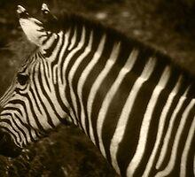 Sepia Zebra by dangerouslyclos