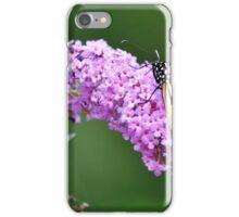 Monarch Butterfly on Butterfly Bush iPhone Case/Skin