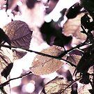 Crystalline    by PictureNZ