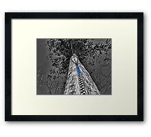 TREE WITH A ZIPPED POINT OF VIEW  Framed Print