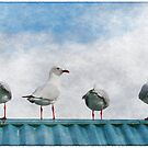 Seagulls by Stephen Mitchell