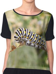 Black Swallowtail Caterpillar  Chiffon Top