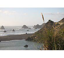 California Grass Photographic Print