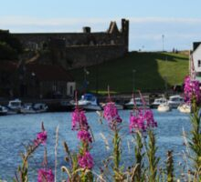 St Andrews Harbour and Pink Flowers Sticker