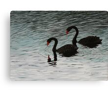 Black Swans at McLaren Falls Park, New Zealand Canvas Print