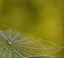 The Webs We Weave by barnsis