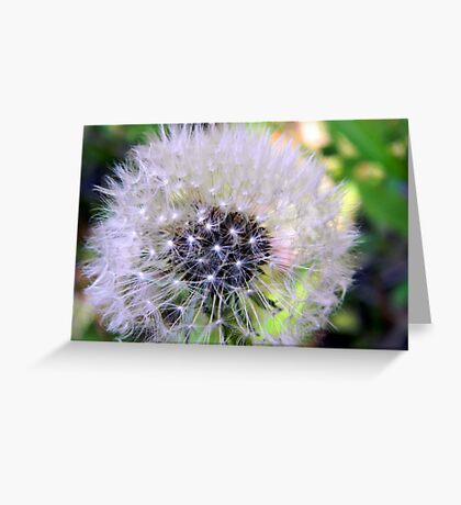 little webs Greeting Card