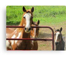 The Thinking Horses Metal Print