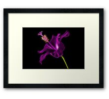 Purple Hibiscus Framed Print