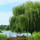 The Willow  by lorilee