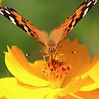 butterfly on yellow by ANNABEL   S. ALENTON