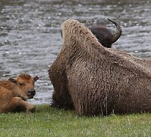 Resting on the Madison by Ken McElroy
