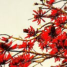 Flame Tree Red by Rasendyll