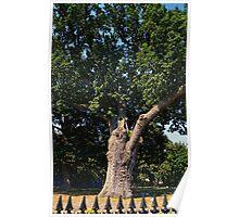 Great Salem Oak Tree Poster